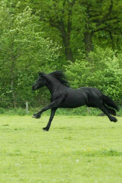 paardencoaching welzijn